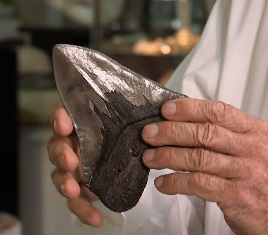 Fossilized Shark Tooth